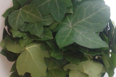 Lessive au lierre - récupérez des feuilles